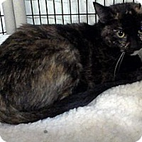 Domestic Mediumhair Cat for adoption in Muskegon, Michigan - jenna