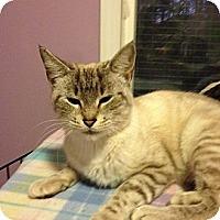 Adopt A Pet :: Jasmine - Monroe, GA