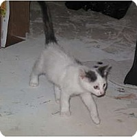 Adopt A Pet :: Skip - Port Republic, MD