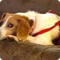 Adopt A Pet :: Cece' - Minnetonka, MN