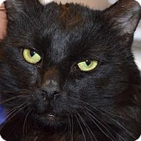 Adopt A Pet :: Mickey - Sanford, ME