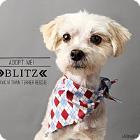 Adopt A Pet :: Blitz-pending adoption - Omaha, NE