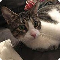 Adopt A Pet :: Mai Tai - New York, NY