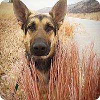 Adopt A Pet :: Jansen - Littleton, CO