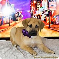 Adopt A Pet :: Beale - Little Rock, AR