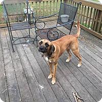 Adopt A Pet :: Sir Ellington - Beaumont, TX