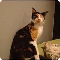 Adopt A Pet :: Peek-A-Boo--PETSMART - Muncie, IN