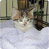 Adopt A Pet :: Reese - Catasauqua, PA