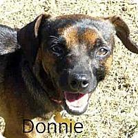 Adopt A Pet :: Donnie - San Jose, CA