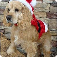 Adopt A Pet :: Lester - Sugarland, TX