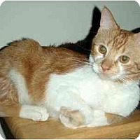 Adopt A Pet :: Oliver - Hamilton, ON