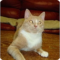 Adopt A Pet :: Rocket - Elmira, ON