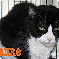 Adopt A Pet :: Laure - East Stroudsburg, PA