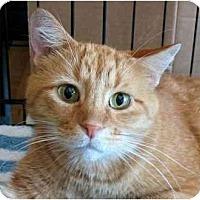 Adopt A Pet :: Five-O - Plainville, MA