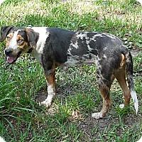 Adopt A Pet :: Sonny - Ormond Beach, FL