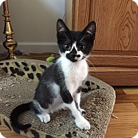 Adopt A Pet :: PEPE aka BATTY - Hamilton, NJ