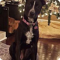 Adopt A Pet :: Lola - North Bend, WA