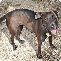 Adopt A Pet :: Cinnamon - Meridian, ID