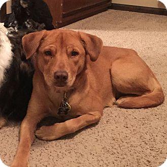 German Shepherd Dog Mix Dog for adoption in Wichita, Kansas - Daisy