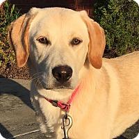 Adopt A Pet :: Sophia - CUMMING, GA