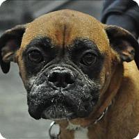 Adopt A Pet :: Sophie - Osage Beach, MO