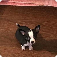 Adopt A Pet :: Gatsby - Wyoming, MI