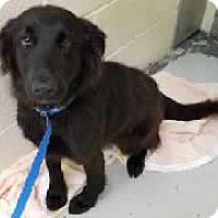 Adopt A Pet :: Maisie - Avon, NY