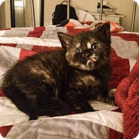 Adopt A Pet :: .Crisp - Baltimore, MD