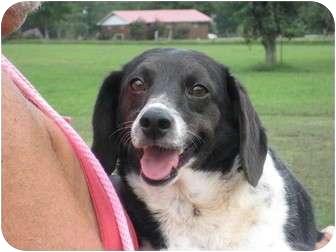 Beagle Mix Dog for adoption in Greenville, Rhode Island - Sidney