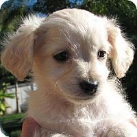 Adopt A Pet :: Kiwi - La Costa, CA