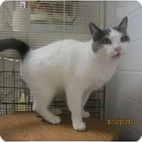Adopt A Pet :: Wyatt - Sterling Hgts, MI