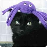 Adopt A Pet :: Kippy - Brea, CA