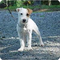Adopt A Pet :: SHELLI - Scottsdale, AZ
