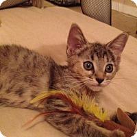 Adopt A Pet :: Bonnie - Redondo Beach, CA