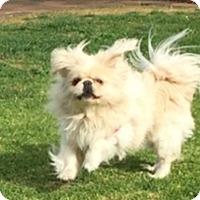 Adopt A Pet :: PRINCE BUG BUG - SO CALIF, CA