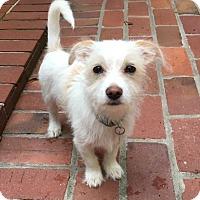Adopt A Pet :: Max - Atlanta, GA