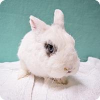 Adopt A Pet :: S'mores - Fountain Valley, CA
