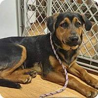 Adopt A Pet :: Rain - Sacramento, CA