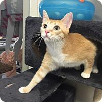 Adopt A Pet :: Marigold - San Leon, TX