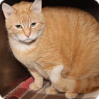 Adopt A Pet :: Ed (Neutered) - Marietta, OH