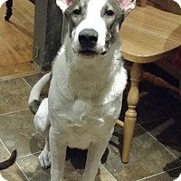 Adopt A Pet :: Jekyll:So SMART! (NJ) - Madison, WI