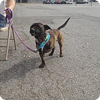 Adopt A Pet :: Pawli - Wytheville, VA