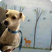 Adopt A Pet :: URGENT ON 4/21  San Bernardino - San Bernardino, CA