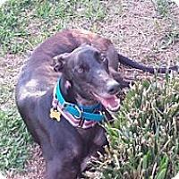 Adopt A Pet :: Cdc Minnie - Knoxville, TN