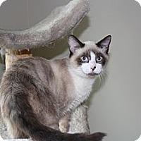 Adopt A Pet :: Sammy - Armuchee, GA