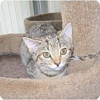Adopt A Pet :: Dolce - Catasauqua, PA