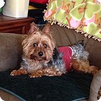 Adopt A Pet :: Jake - Baton Rouge, LA