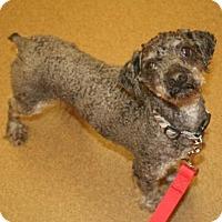 Adopt A Pet :: Weston - Shawnee Mission, KS