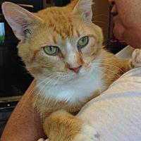 Adopt A Pet :: Liam - Smyrna, GA