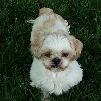 Adopt A Pet :: Magoo - Broken Bow, NE